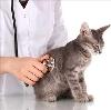 Ветеринарные клиники в Малой Сердобе